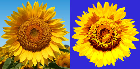 Sunflower photo and illustration